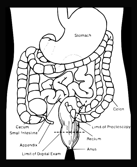 digestive-40607_640