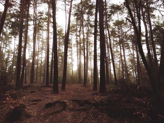 wood-1209134_640