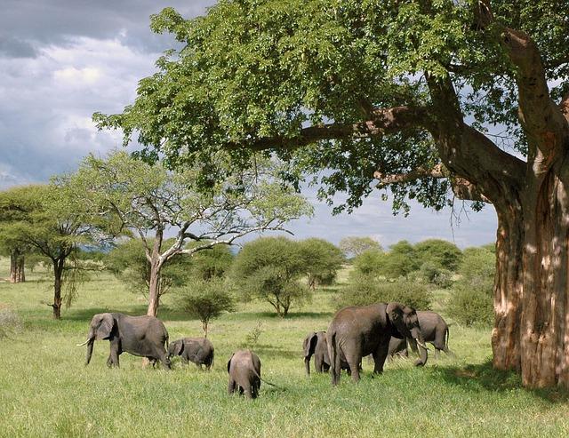 elephant-289134_640