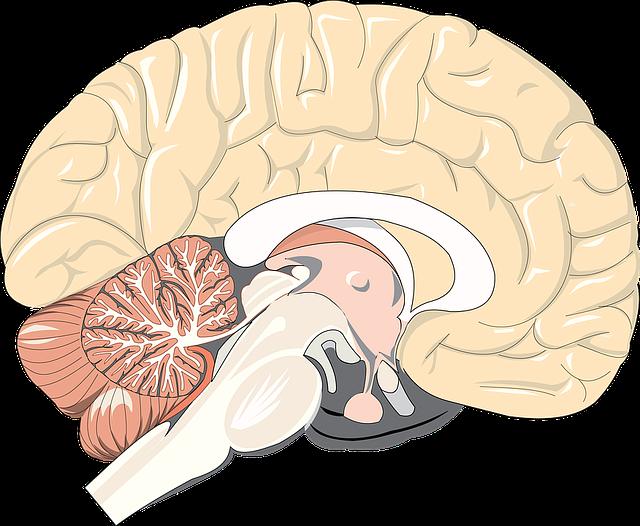 brain-1132229_640