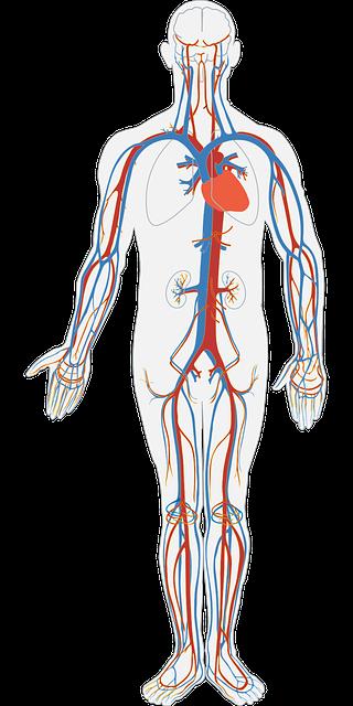 human-body-311864_640