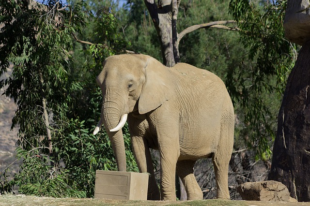 elephant-1176562_640