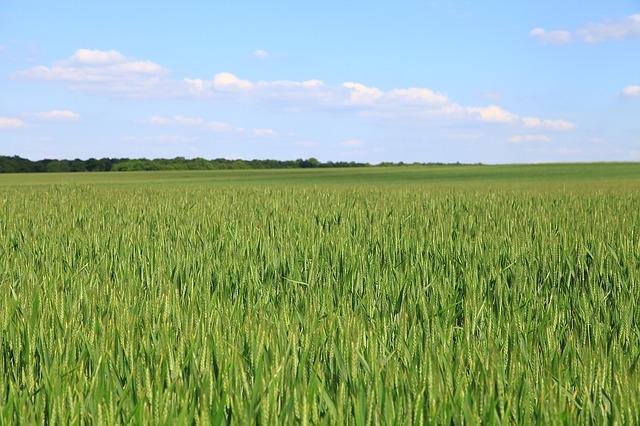 fields-1180781_640