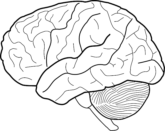 brain-303186_640