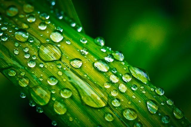 leaf-1422177_640