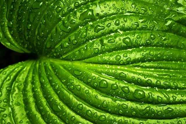 leaf-749929_640