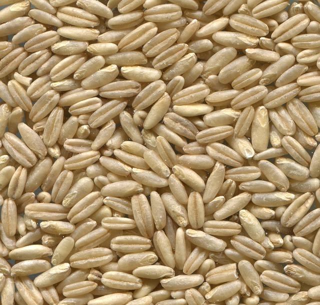 naked-oats-848959_640