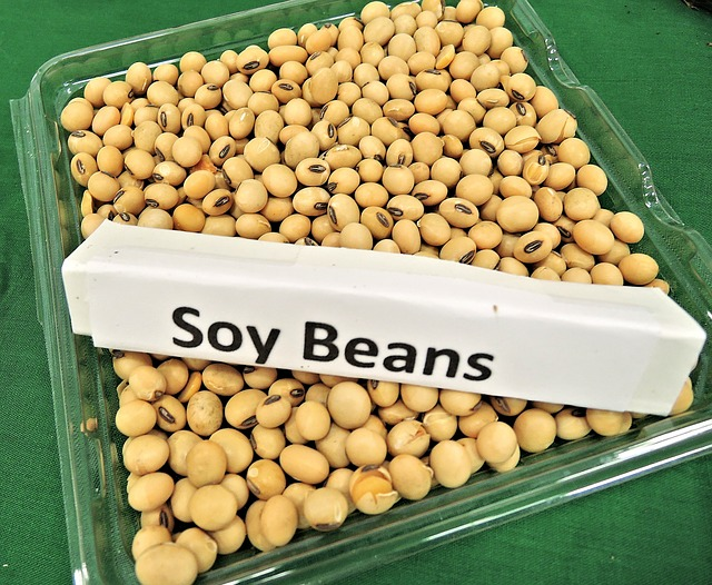 soy-beans-968986_640