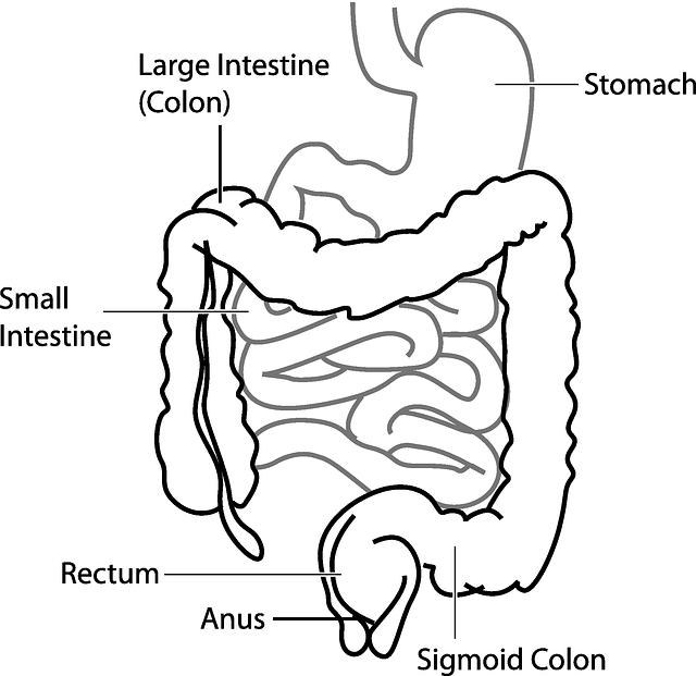 diagram-41638_640