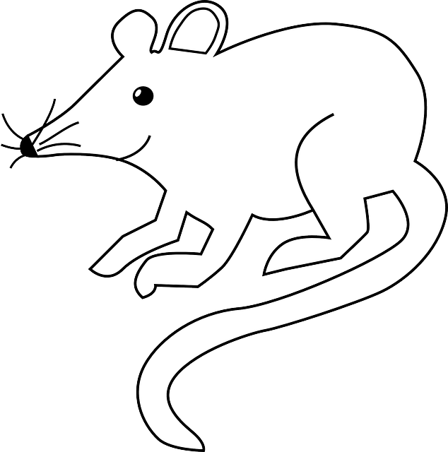 mouse-29402_640