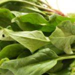 ビタミンAを豊富に含むほうれん草は、美容効果もきわめて大きい