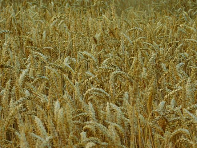 field-1541682_640