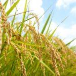 食物は歴史を紡ぐ【先祖が食べていた穀類に意識を向けよう】
