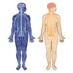 化学物質が身体と心に問題を引き起こす【自然と化学物質】