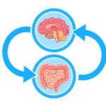 感情脳と密接に関係する腸内環境の浄化を【腸は考える臓器である】