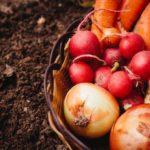 食物の陰陽【古代の食物がもつ生命力に目を向ける】