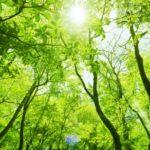 食や生活が自然から離れるほど生命力が低下する【季節と時代の陰陽】