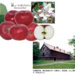 完全無農薬で出来たリンゴ【慣行農法からの転換の困難】