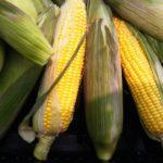 腸荒れの原因の一つに遺伝子組み換え食品の影響